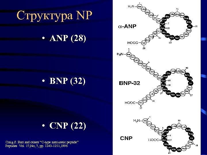 Структура NP • ANP (28) • BNP (32) • CNP (22) Craig S. Barr