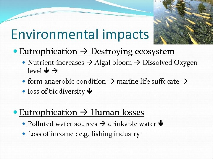 Environmental impacts Eutrophication Destroying ecosystem Nutrient increases Algal bloom Dissolved Oxygen level form anaerobic