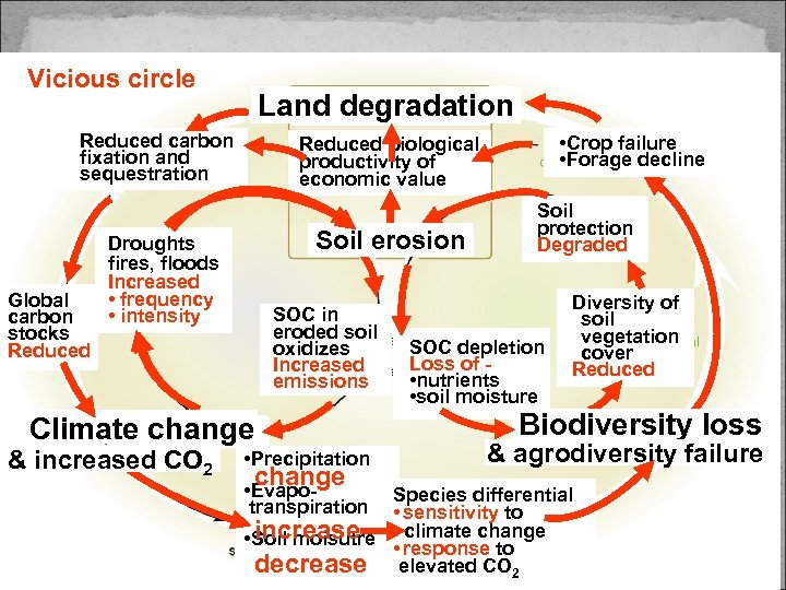 Vicious circle Land degradation Reduced carbon fixation and sequestration Global carbon stocks Reduced Soil