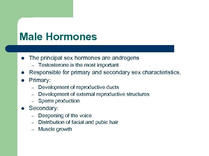 Male Hormones l The principal sex hormones are androgens – l l Responsible for