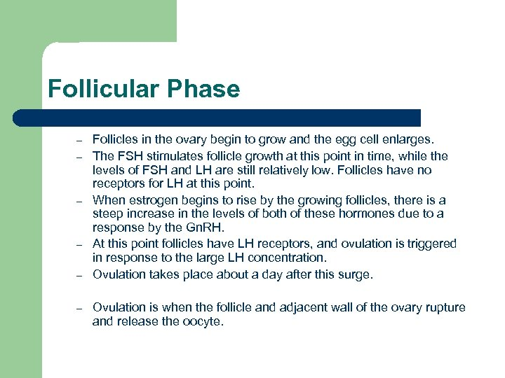 Follicular Phase – – – Follicles in the ovary begin to grow and the