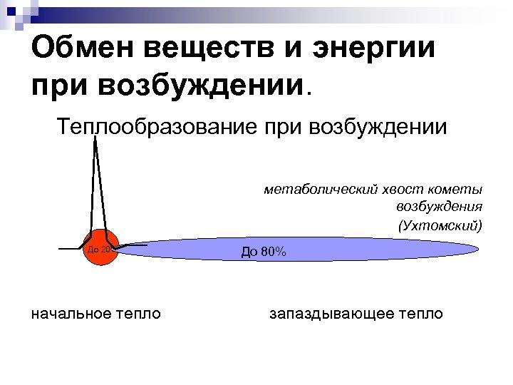 Обмен веществ и энергии при возбуждении. Теплообразование при возбуждении метаболический хвост кометы возбуждения (Ухтомский)