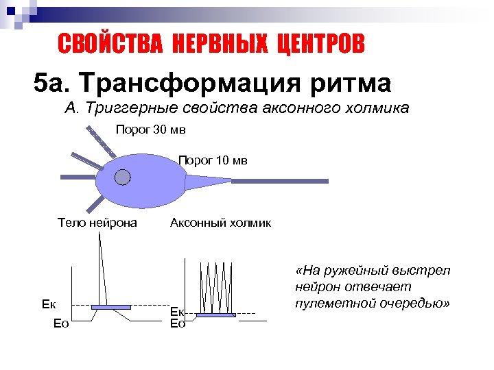 СВОЙСТВА НЕРВНЫХ ЦЕНТРОВ 5 а. Трансформация ритма А. Триггерные свойства аксонного холмика Порог 30