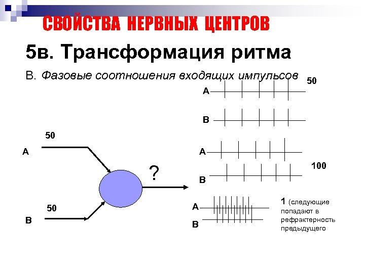 СВОЙСТВА НЕРВНЫХ ЦЕНТРОВ 5 в. Трансформация ритма В. Фазовые соотношения входящих импульсов А 50