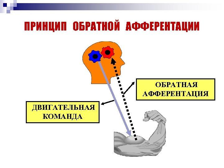 ПРИНЦИП ОБРАТНОЙ АФФЕРЕНТАЦИИ ОБРАТНАЯ АФФЕРЕНТАЦИЯ ДВИГАТЕЛЬНАЯ КОМАНДА