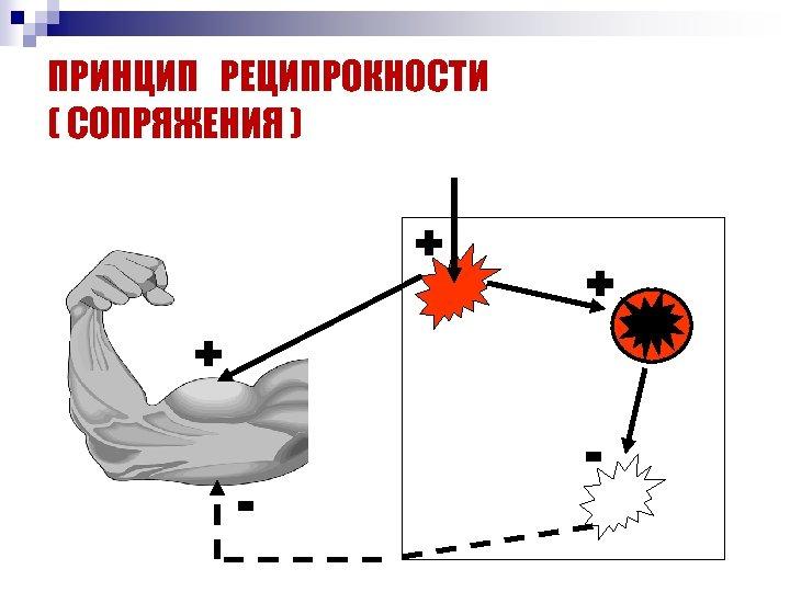ПРИНЦИП РЕЦИПРОКНОСТИ ( СОПРЯЖЕНИЯ ) + + + - -