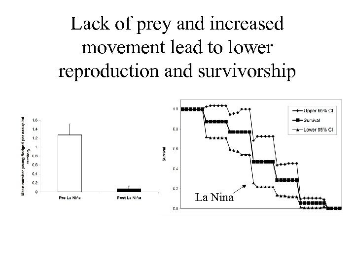Lack of prey and increased movement lead to lower reproduction and survivorship La Nina
