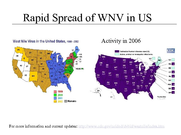 Rapid Spread of WNV in US Activity in 2006 For more information and current