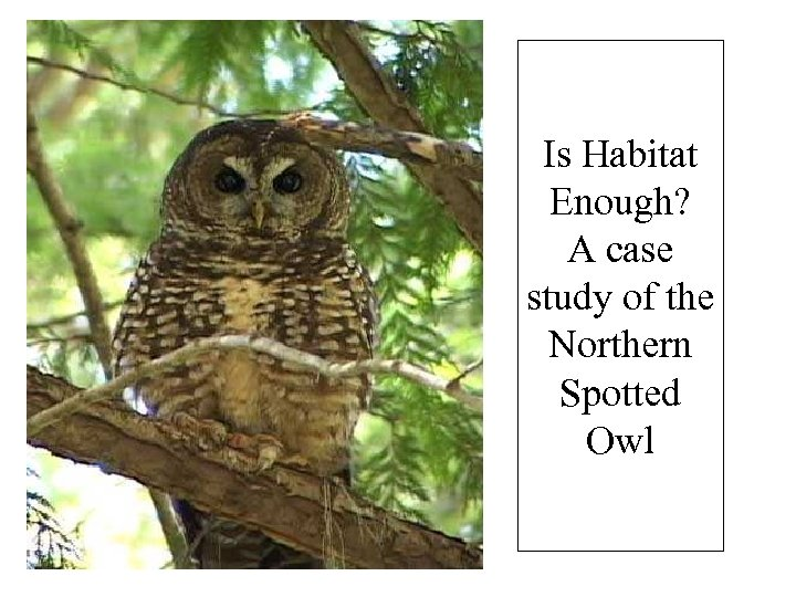 Is Habitat Enough? A case study of the Northern Spotted Owl