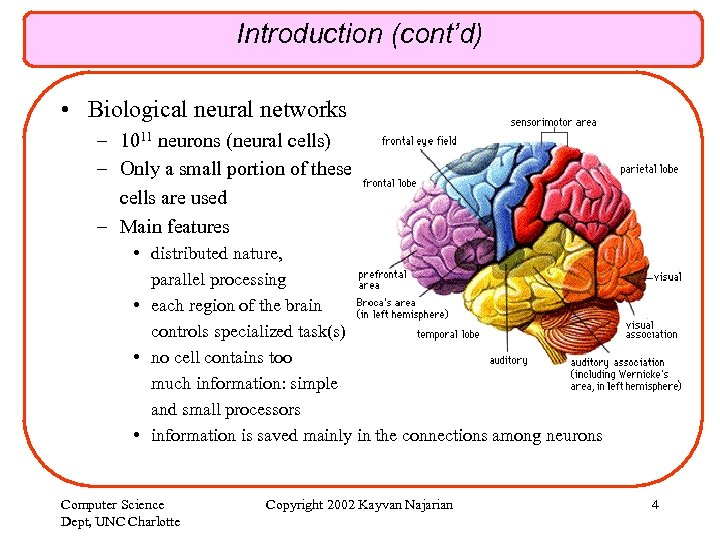 Introduction (cont'd) • Biological neural networks – 1011 neurons (neural cells) – Only a
