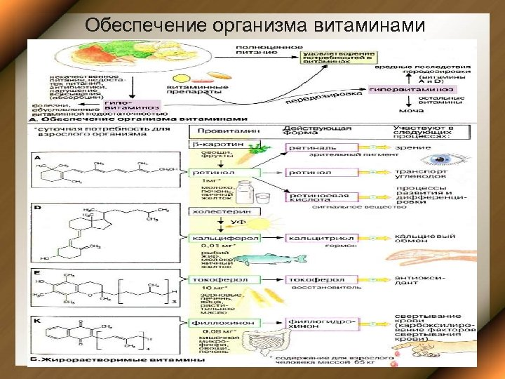 Обеспечение организма витаминами