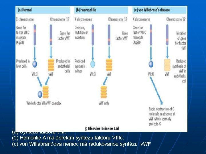 (a) Syntéza faktoru VIII. (b) Hemofilie A má defektní syntézu faktoru VIIIc. (c) von