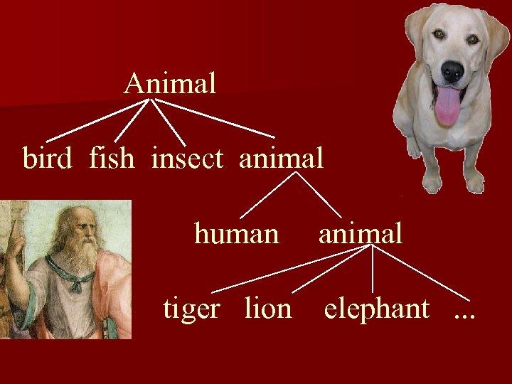 Animal bird fish insect animal human animal tiger lion elephant. . .