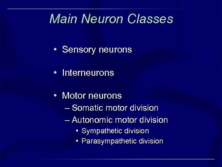 Main Neuron Classes • Sensory neurons • Interneurons • Motor neurons – Somatic motor