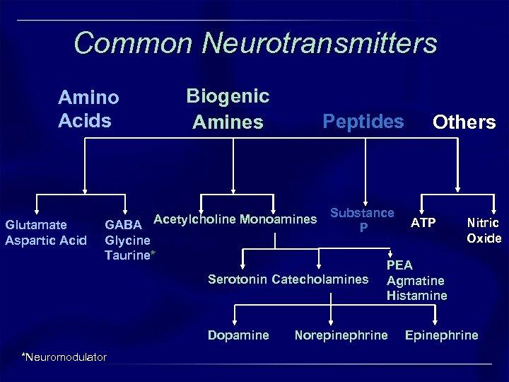 Common Neurotransmitters Biogenic Amines Amino Acids Glutamate Aspartic Acid Peptides GABA Acetylcholine Monoamines Glycine