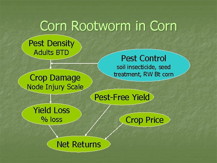 Corn Rootworm in Corn Pest Density Adults BTD Pest Control soil insecticide, seed treatment,