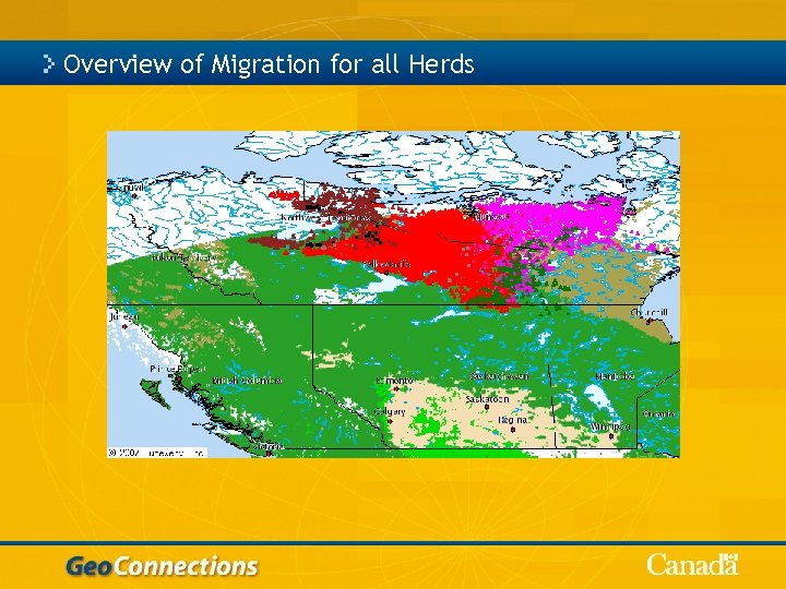 Overview of Migration for all Herds