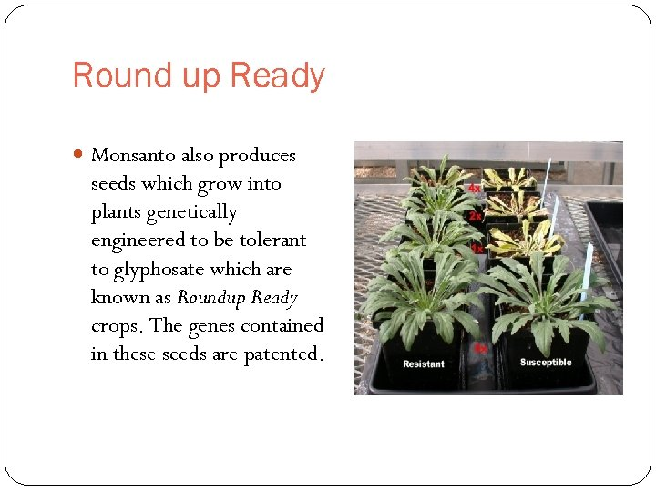 Round up Ready Monsanto also produces seeds which grow into plants genetically engineered to