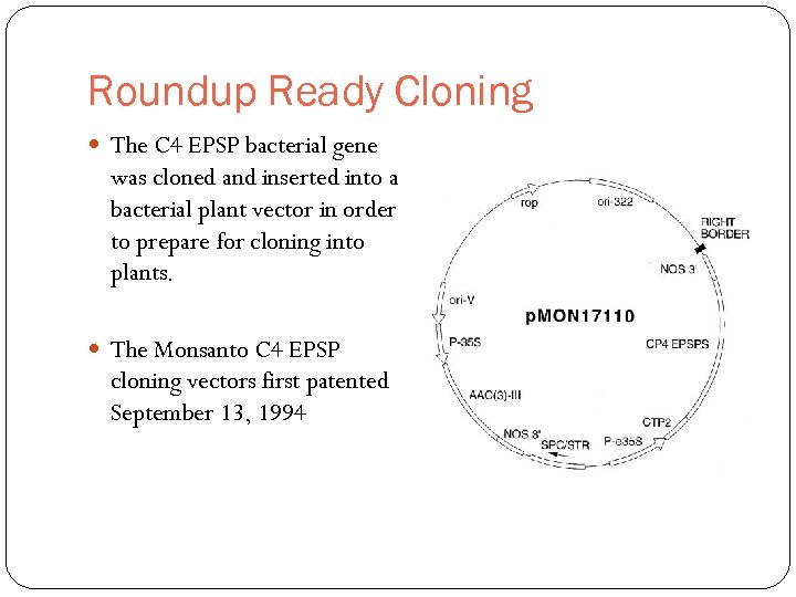 Roundup Ready Cloning The C 4 EPSP bacterial gene was cloned and inserted into