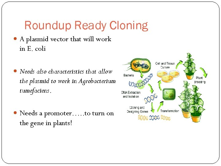 Roundup Ready Cloning A plasmid vector that will work in E. coli Needs also