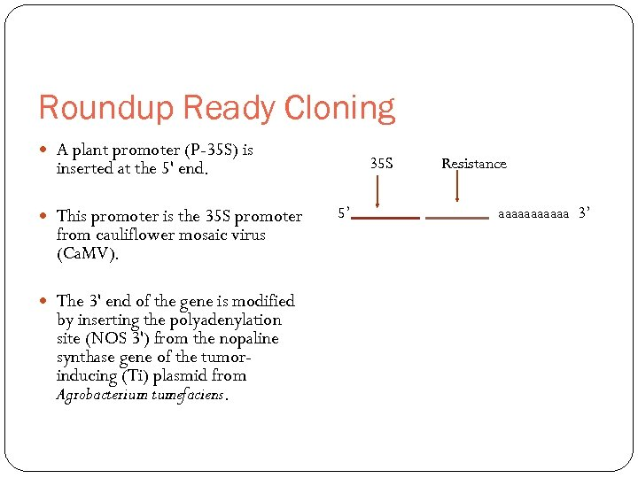 Roundup Ready Cloning A plant promoter (P-35 S) is 35 S inserted at the