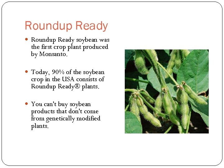 Roundup Ready soybean was the first crop plant produced by Monsanto. Today, 90% of