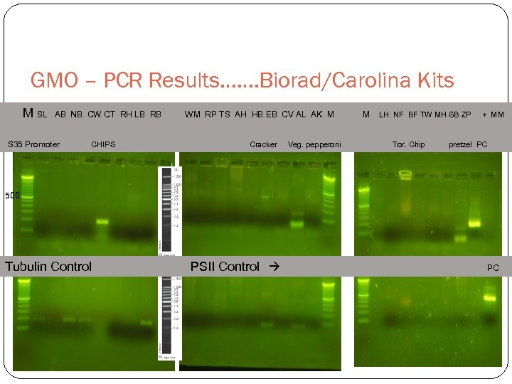 GMO – PCR Results……. Biorad/Carolina Kits M SL AB NB CW CT RH LB