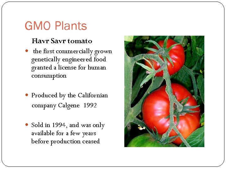 GMO Plants Flavr Savr tomato the first commercially grown genetically engineered food granted a