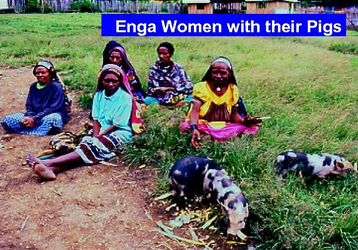 Enga Women with their Pigs