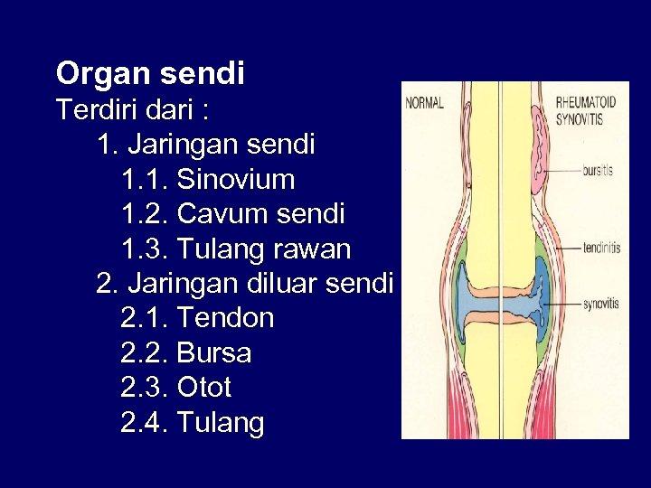 Organ sendi Terdiri dari : 1. Jaringan sendi 1. 1. Sinovium 1. 2. Cavum