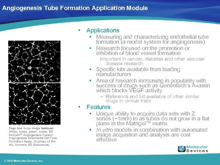 Angiogenesis Tube Formation Application Module • Applications • Measuring and characterizing endothelial tube formation