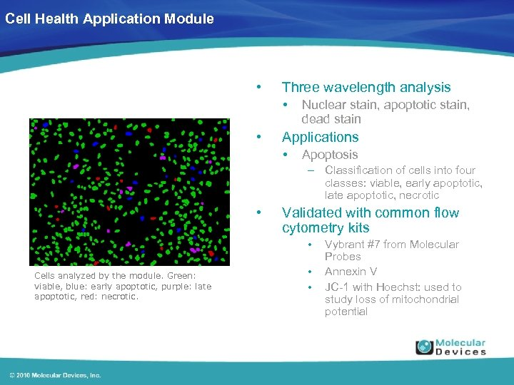 Cell Health Application Module • Three wavelength analysis • • Nuclear stain, apoptotic stain,