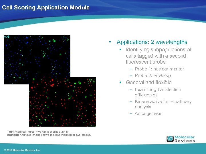 Cell Scoring Application Module • Applications: 2 wavelengths • Identifying subpopulations of cells tagged