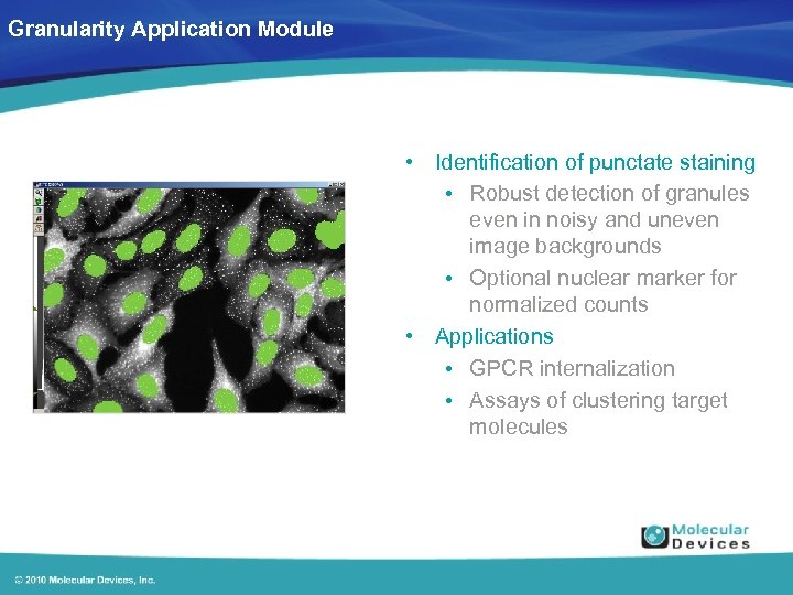 Granularity Application Module • Identification of punctate staining • Robust detection of granules even
