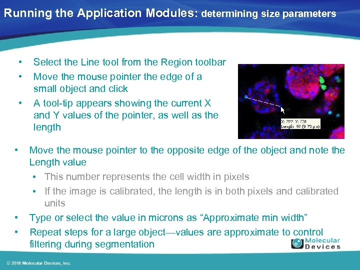 Running the Application Modules: determining size parameters • • • Select the Line tool