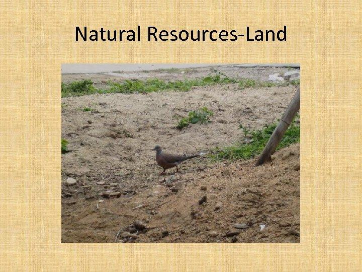 Natural Resources-Land
