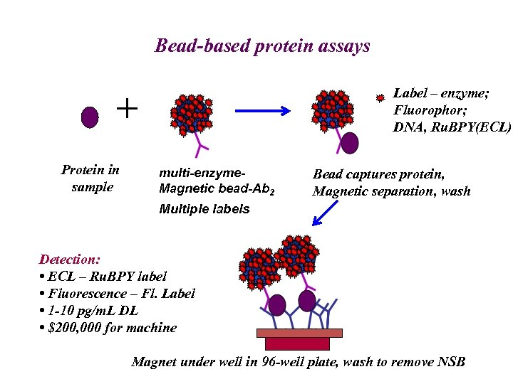 Bead-based protein assays Label – enzyme; Fluorophor; DNA, Ru. BPY(ECL) + Protein in sample