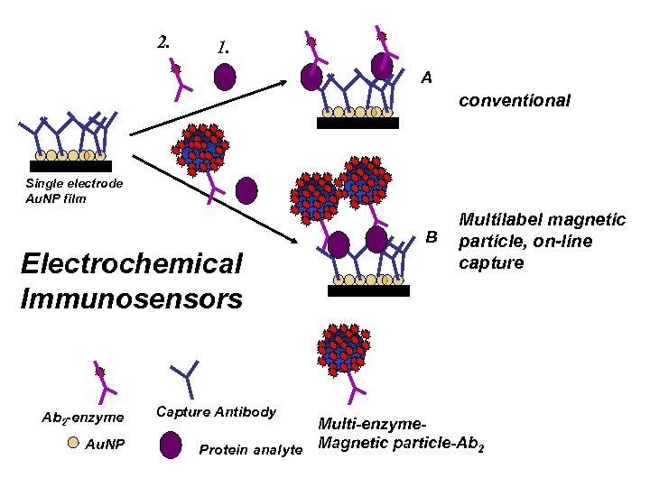 2. 1. A conventional Single electrode Au. NP film B Electrochemical Immunosensors Ab 2