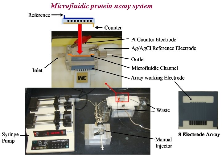 Microfluidic protein assay system