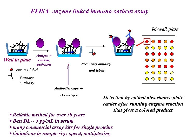 ELISA- enzyme linked immuno-sorbent assay 96 -well plate Well in plate Antigen = Protein,