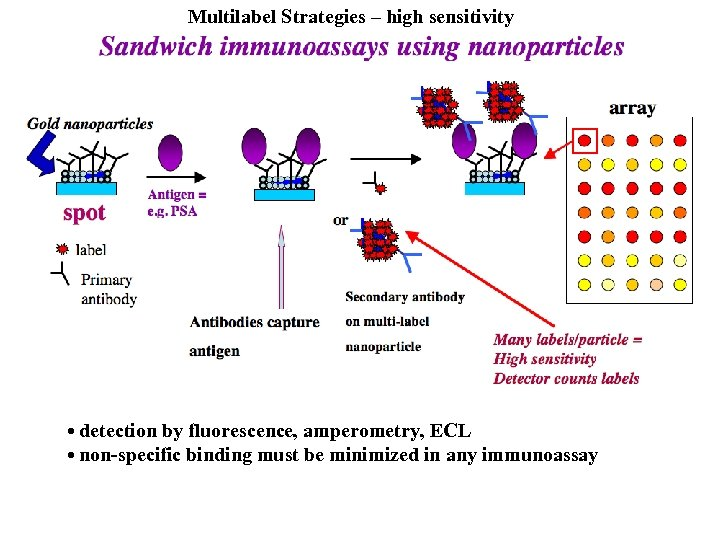 Multilabel Strategies – high sensitivity • detection by fluorescence, amperometry, ECL • non-specific binding