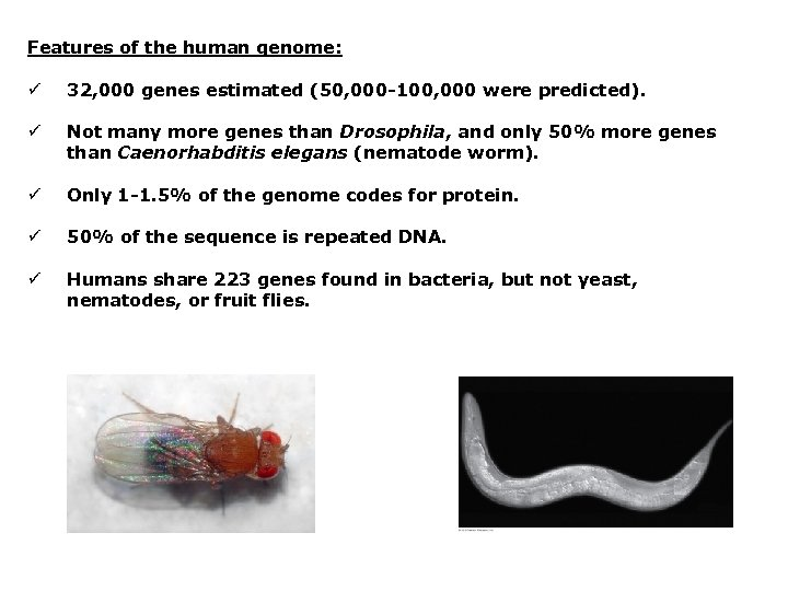 Features of the human genome: ü 32, 000 genes estimated (50, 000 -100, 000
