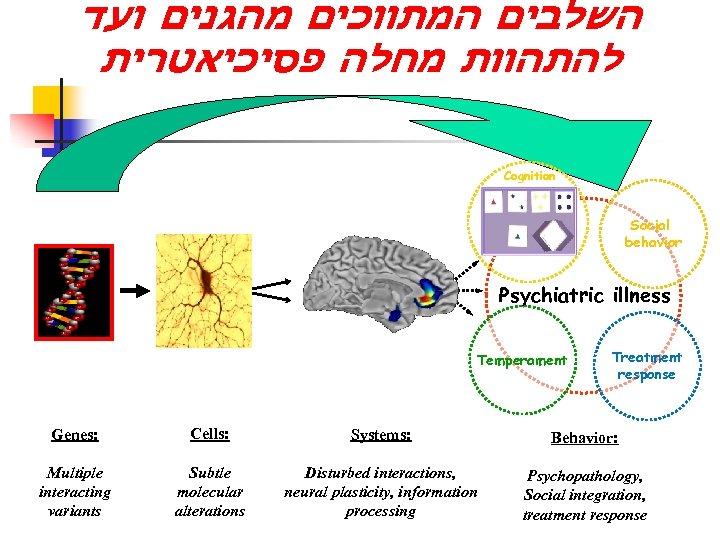 השלבים המתווכים מהגנים ועד להתהוות מחלה פסיכיאטרית Cognition Social behavior Psychiatric illness Temperament