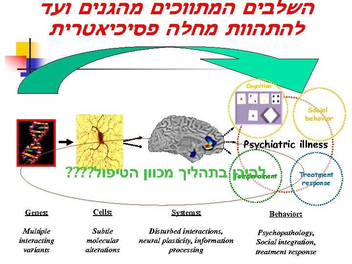 השלבים המתווכים מהגנים ועד להתהוות מחלה פסיכיאטרית Cognition Social behavior Psychiatric illness ?