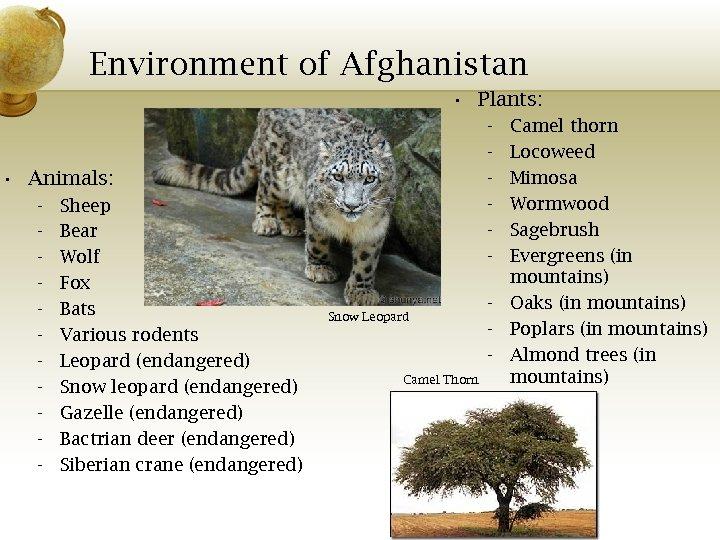 Environment of Afghanistan • Plants: - • Animals: - Sheep Bear Wolf Fox Bats