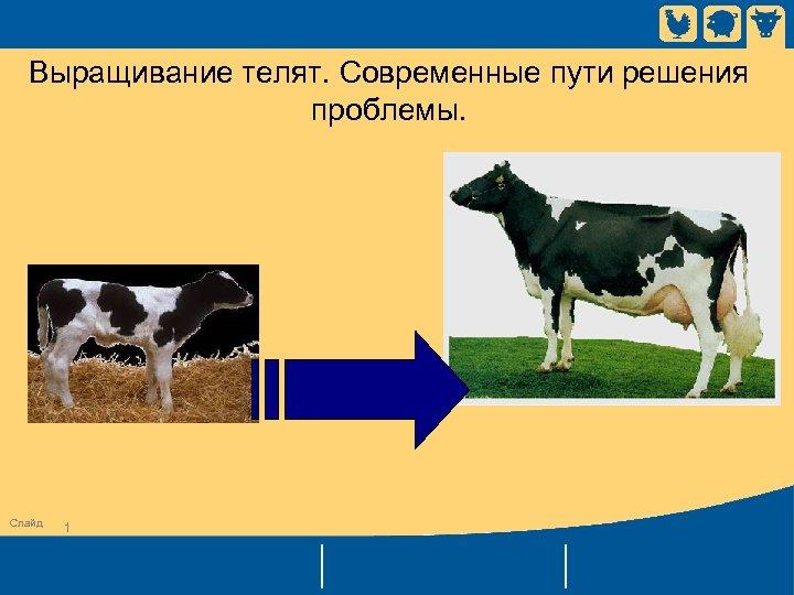Выращивание телят. Современные пути решения проблемы. Слайд 1