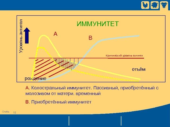 Уровень антител ИММУНИТЕТ A B Критический уровень антител отъём рождение A. Колостральный иммунитет. Пассивный,
