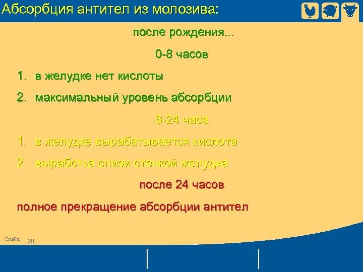 Абсорбция антител из молозива: после рождения. . . 0 -8 часов 1. в желудке