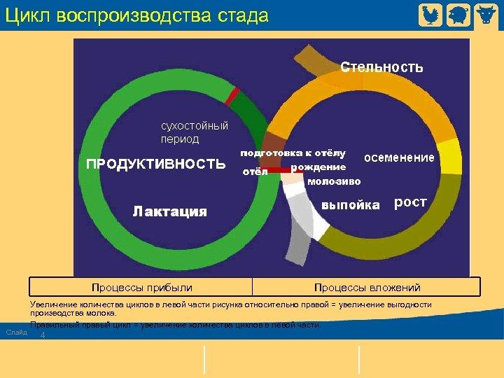 Цикл воспроизводства стада Процессы прибыли Процессы вложений Увеличение количества циклов в левой части рисунка