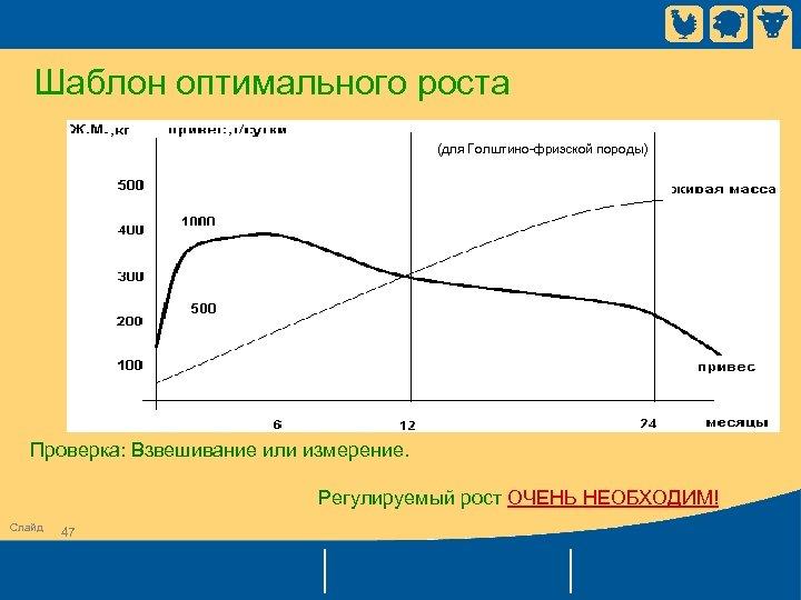 Шаблон оптимального роста (для Голштино-фризской породы) Проверка: Взвешивание или измерение. Регулируемый рост ОЧЕНЬ НЕОБХОДИМ!